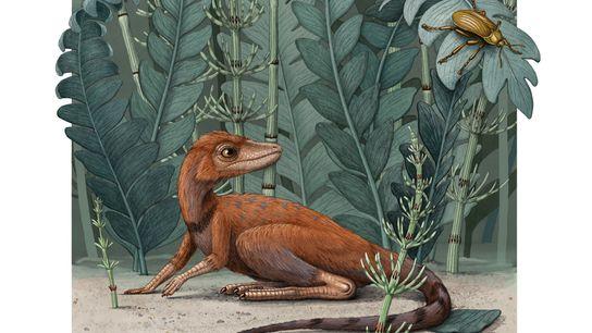 O Kongonaphon, do tamanho de um camundongo, foi um réptil do período Triássico que viveu na ...