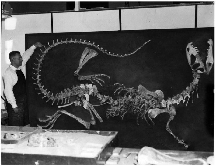 Wann Langston Jr., da Universidade da Califórnia, em Berkeley, supervisionou a reconstrução do primeiro esqueleto dedilofossaurono ...