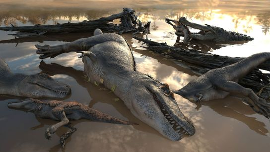 Drowned pack of theropods
