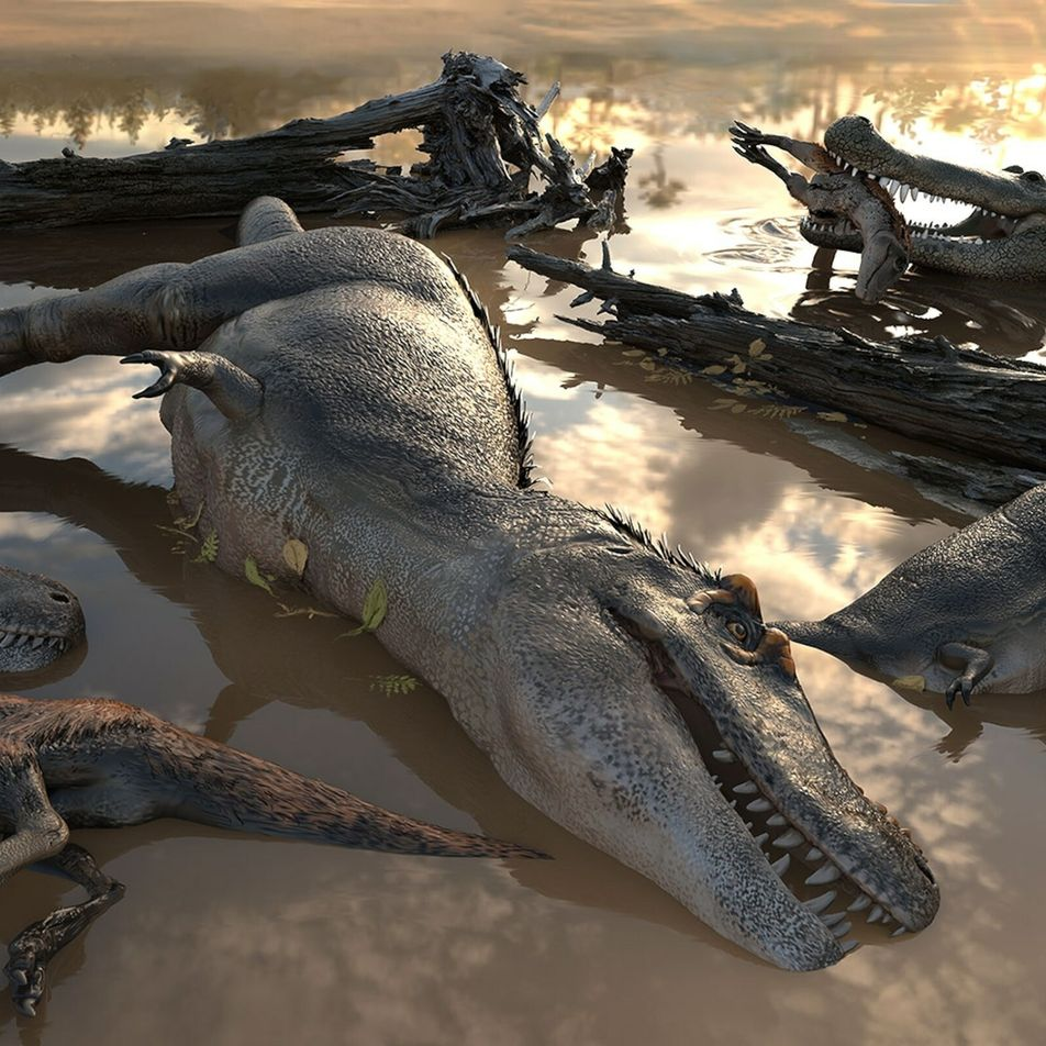 Tiranossauros viviam em bandos? Cientistas debatem sobre novos vestígios fósseis