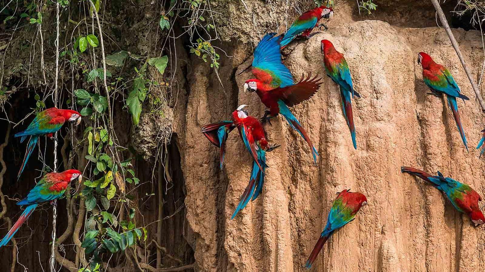 Efeitos locais e globais do desmatamento na Floresta Amazônica