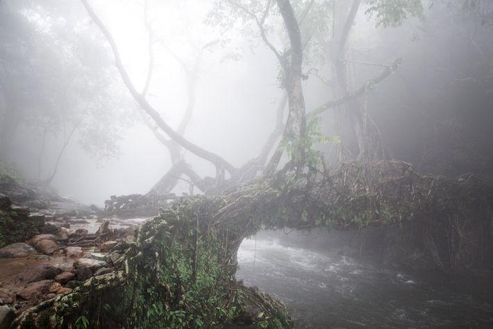 pontes-de-raizes-vivas-meghalaya-india