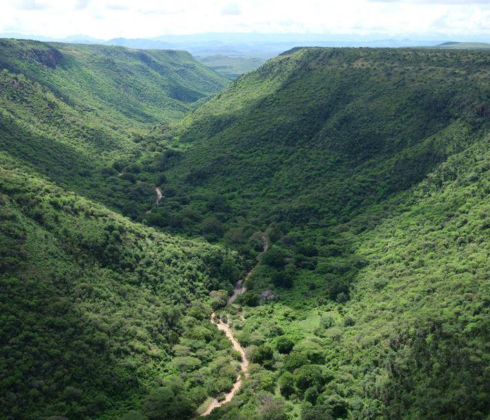 Este vale está na rota dos gafanhotos. O caminho é, em grande parte, determinado pelos ventos.