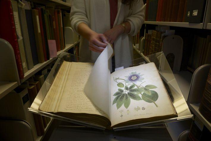 Anne Sauer, diretora do Departamento de Obras e Manuscritos Raros da Universidade Cornell, folheia o manuscrito ...