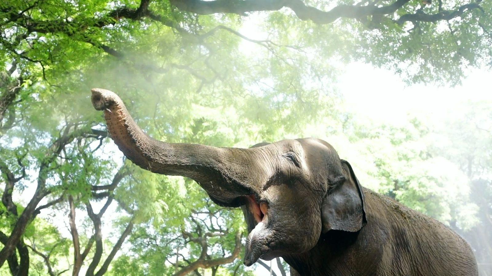 A jornada da elefanta Mara: de Buenos Aires a um santuário no Brasil