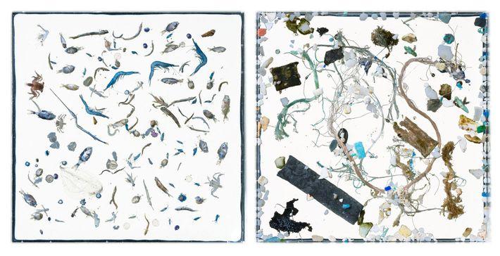 Nesse par de imagens, a vida marinha (esquerda) e restos de plásticos (direita) são separados em ...