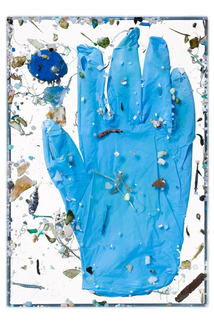 Filhotes de peixes, inclusive um jovem dourado-do-mar (centro), são vistos nadando junto com restos de plástico, ...