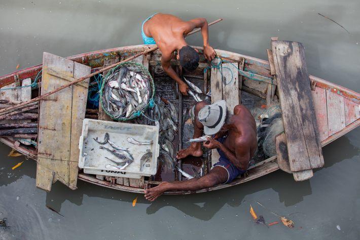 Pescadores artesanais