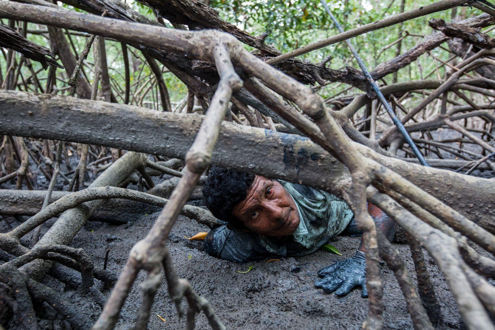 Do mangue à mesa – a pesca artesanal de caranguejos no Pará