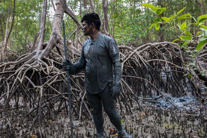 Comunidades tradicionais entre o extrativismo e a conservação nos mangues amazônicos
