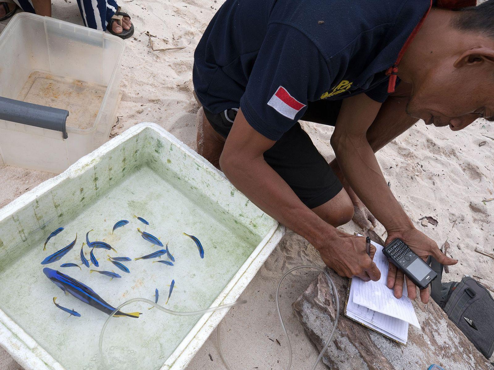 mercado-de-peixes-exoticos