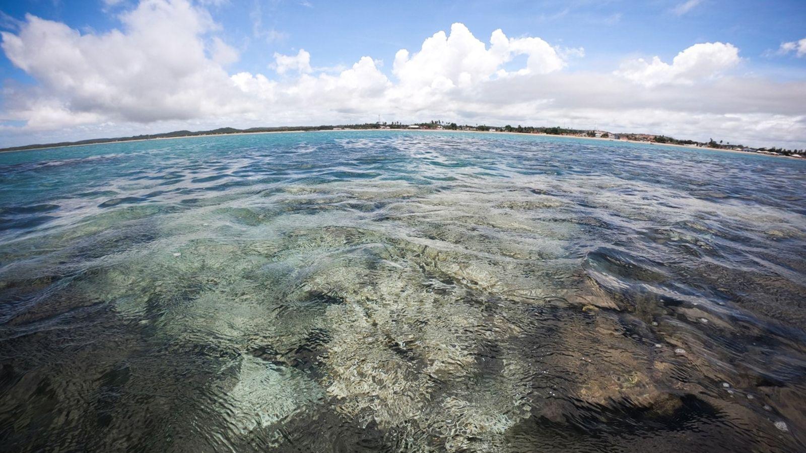 Corais branqueados próximos a cidade de Tamandaré, litoral de Pernambuco. Devido às restrições de mobilidade impostas pela ...