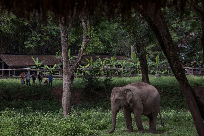"""O Vale dos Elefantes na Tailândia """"foi o santuário de elefantes mais responsável que visitamos"""", afirma ..."""
