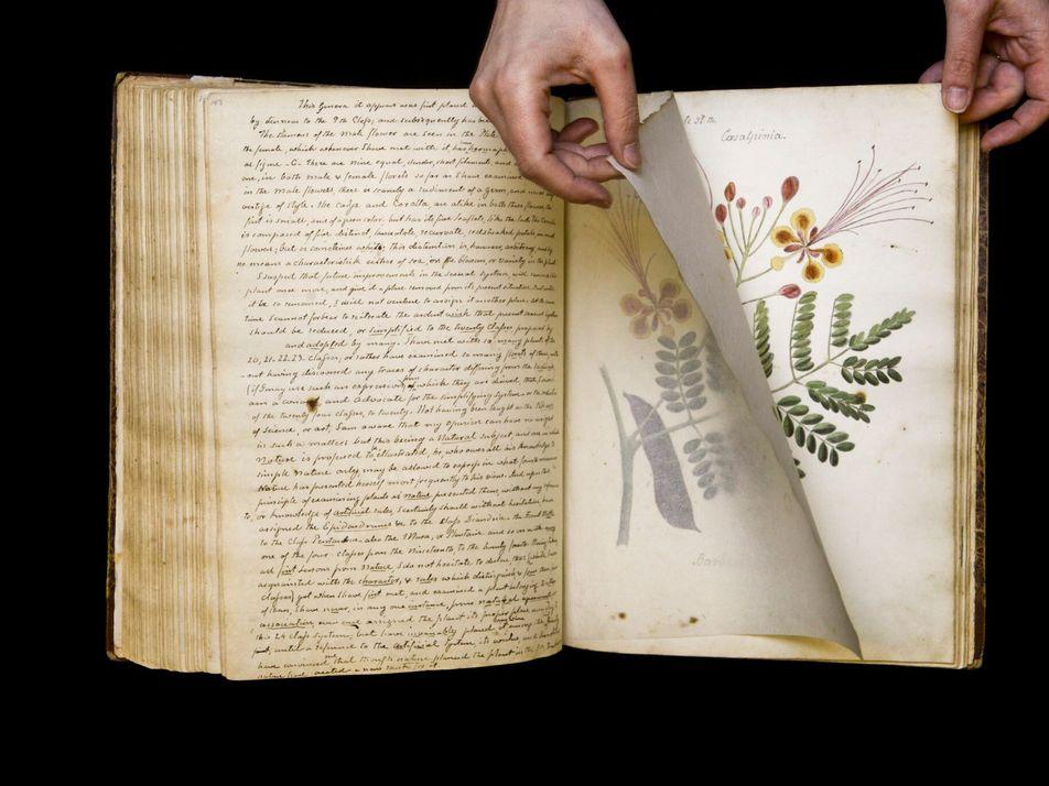 Livro 'perdido' com primorosas ilustrações científicas redescoberto após 190 anos