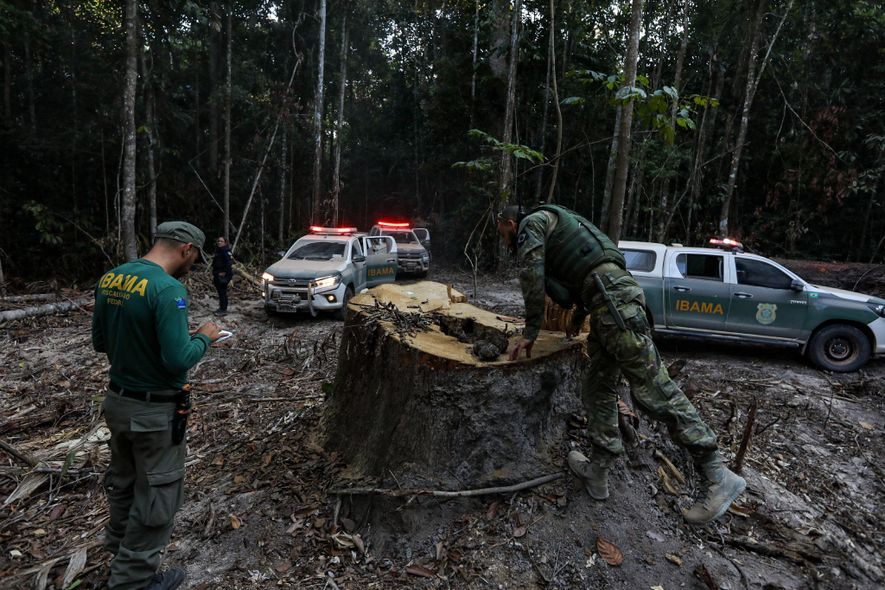 Agentes do Ibama inspecionam o que restou de um tronco nas proximidades do distrito fronteiriço de ...