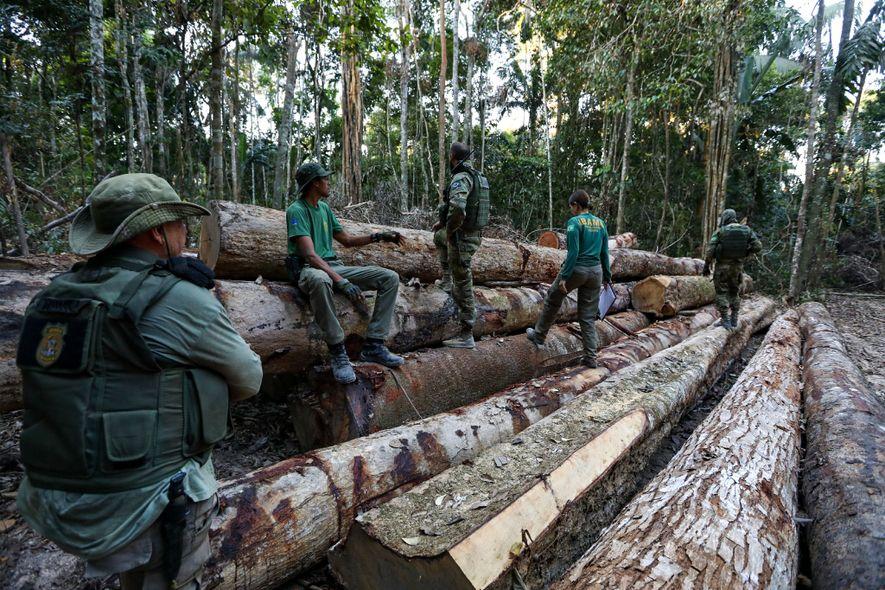 Agentes do Ibama descobrem uma carga de madeira em uma estrada vicinal em Boa Vista de ...