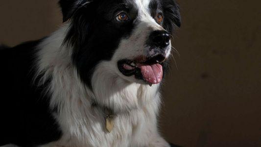 Cães também podem ser 'gênios' – assim como os seres humanos