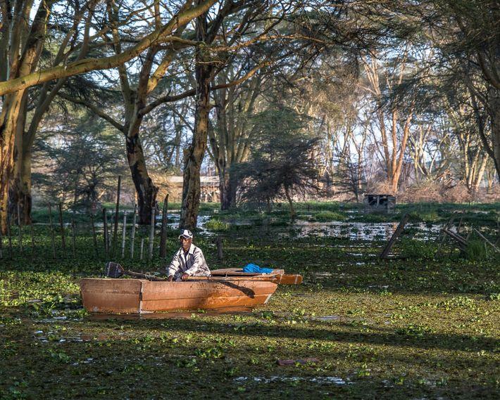 Um pescador retorna de sua pescaria matinal. O aumento do nível do lago inundou as acácias ...