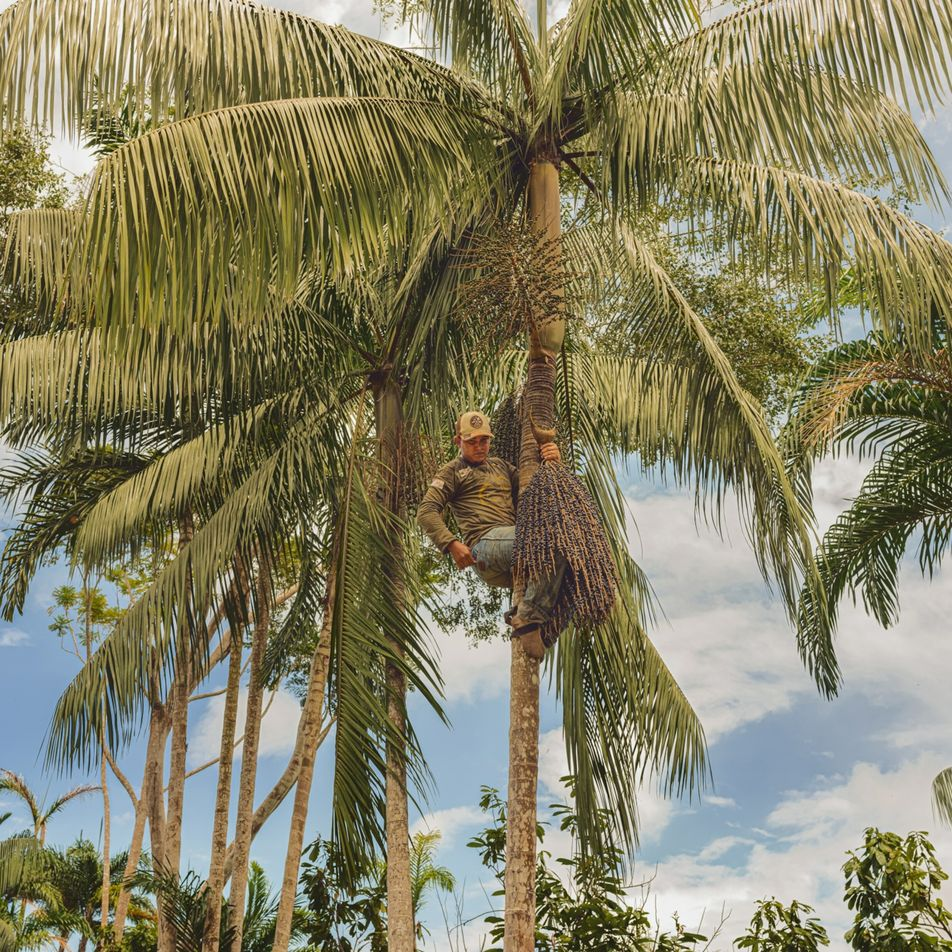 Produtores mostram que a agricultura na Amazônia não precisa ser destrutiva