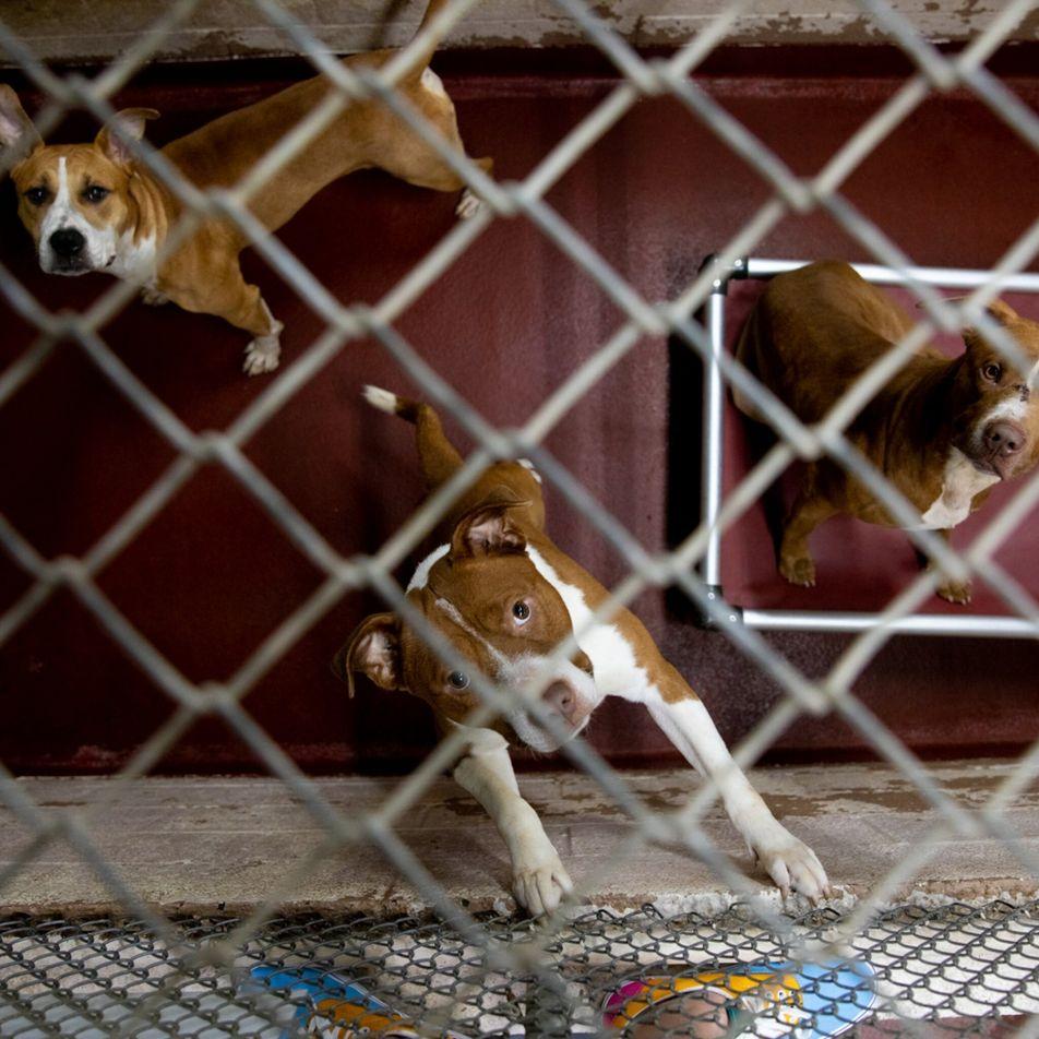 Abrigos de animais enfrentam nova crise