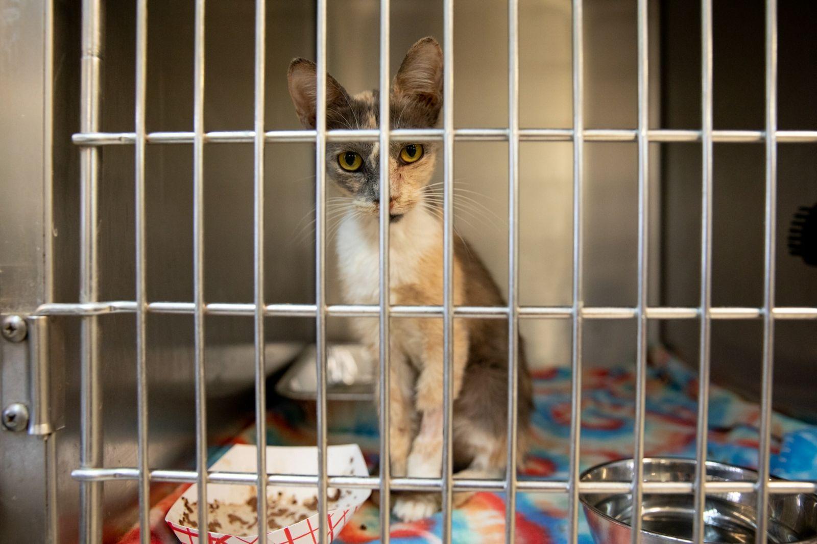 08-animal-shelters