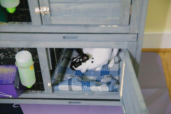 13-animal-shelters