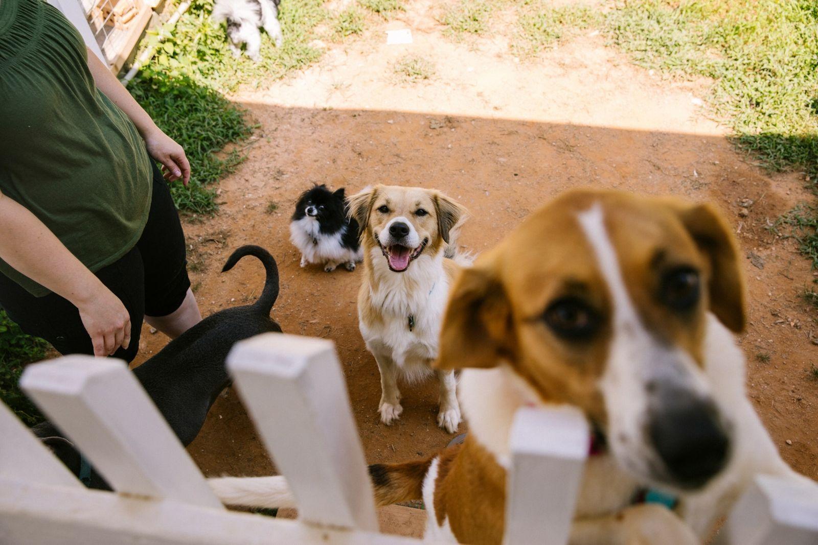 14-animal-shelters