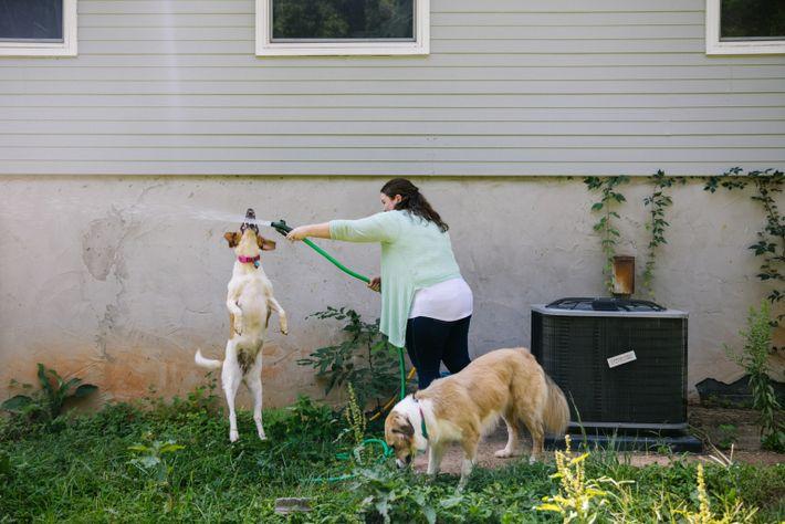 12-animal-shelters