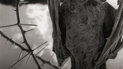 """Estranho: morcegos e aves """"calcificados"""" encontrados em lago da África"""