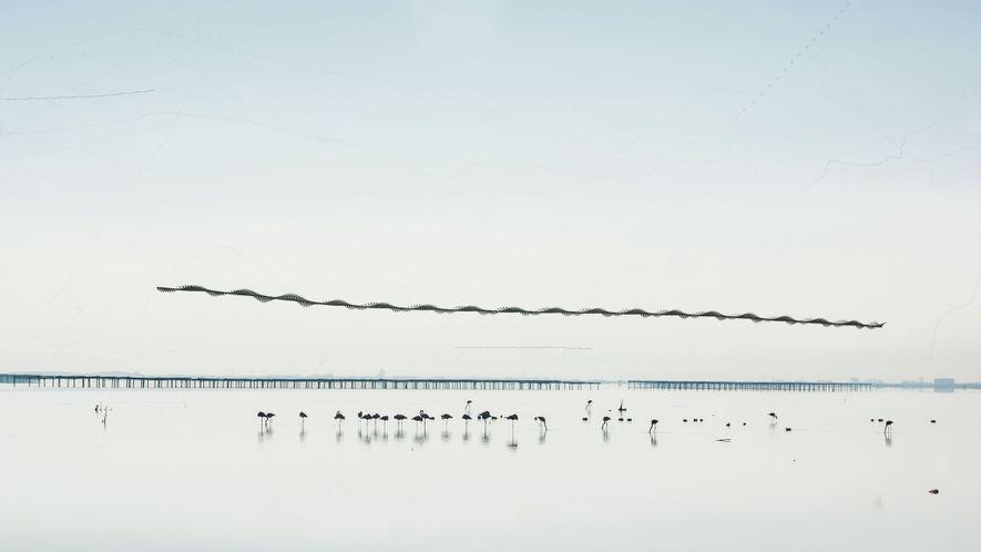 Em uma baía tranquila no delta do rio Ebro, na costa mediterrânea da Espanha, um bando ...