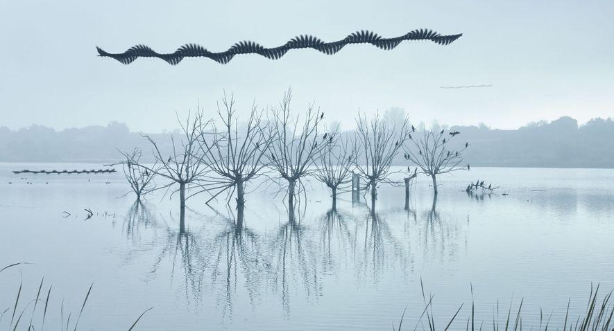 Evocando uma serpente aérea, águias deslizam acima das árvores onde corvos se empoleiram. As zonas úmidas ...