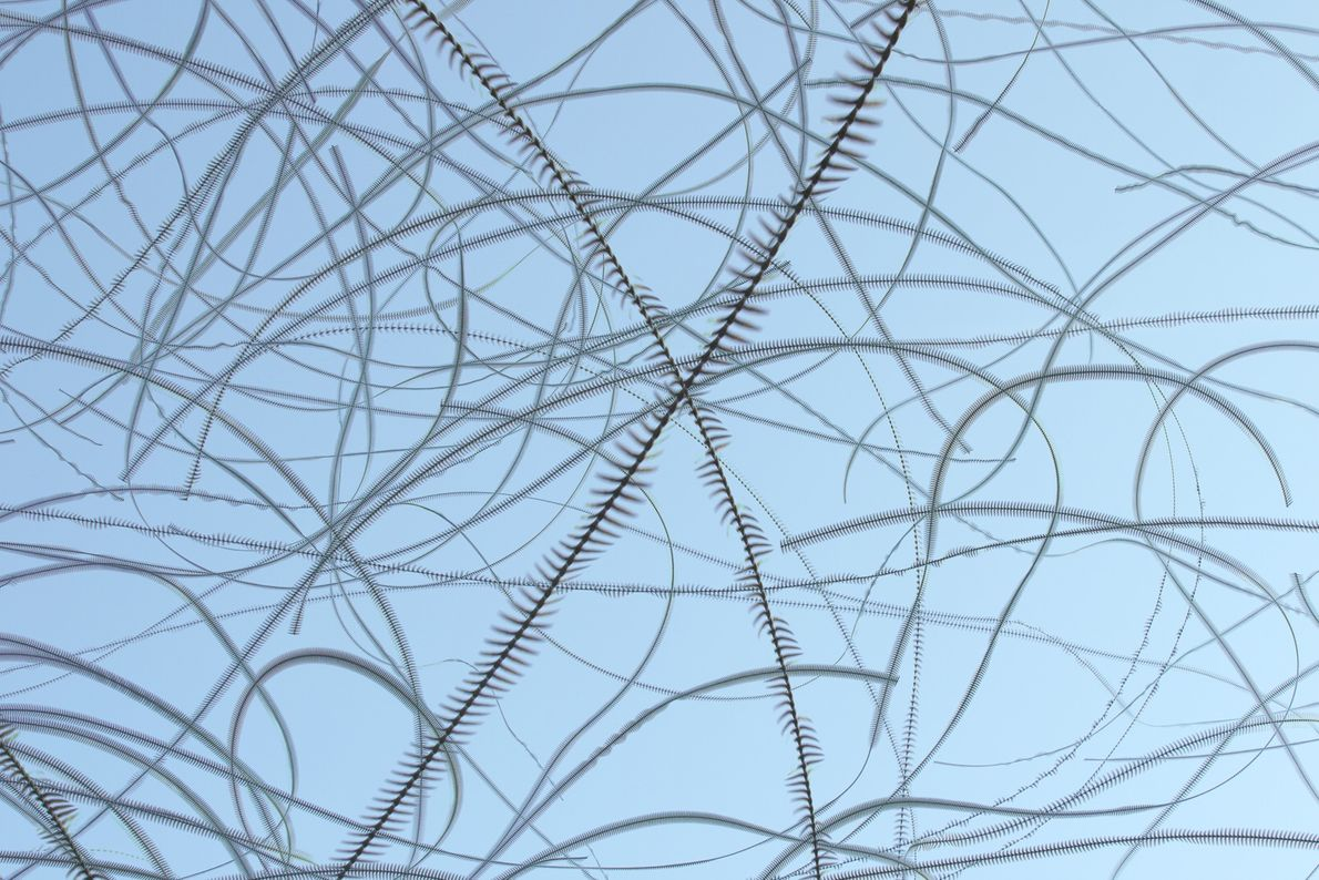 pegadas-rastros-de-aves-passaros