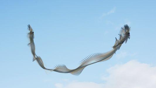 Se pássaros deixassem pegadas no céu, elas seriam assim
