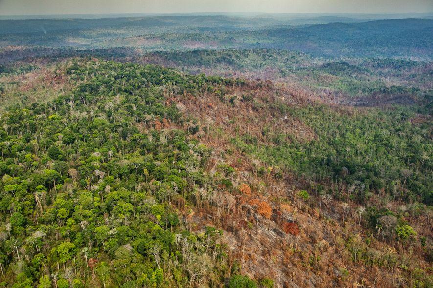 Danos causados por um incêndio no núcleo do Território Indígena Arariboia, que abriga entre 60 e ...