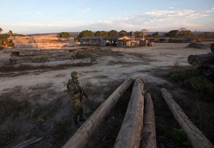 Um oficial solitário do Ibama vigia uma serraria em Boa Vista do Pacarana, Rondônia. Em julho ...