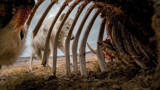 Essas são as fotos mais marcantes de animais que você verá em 2019