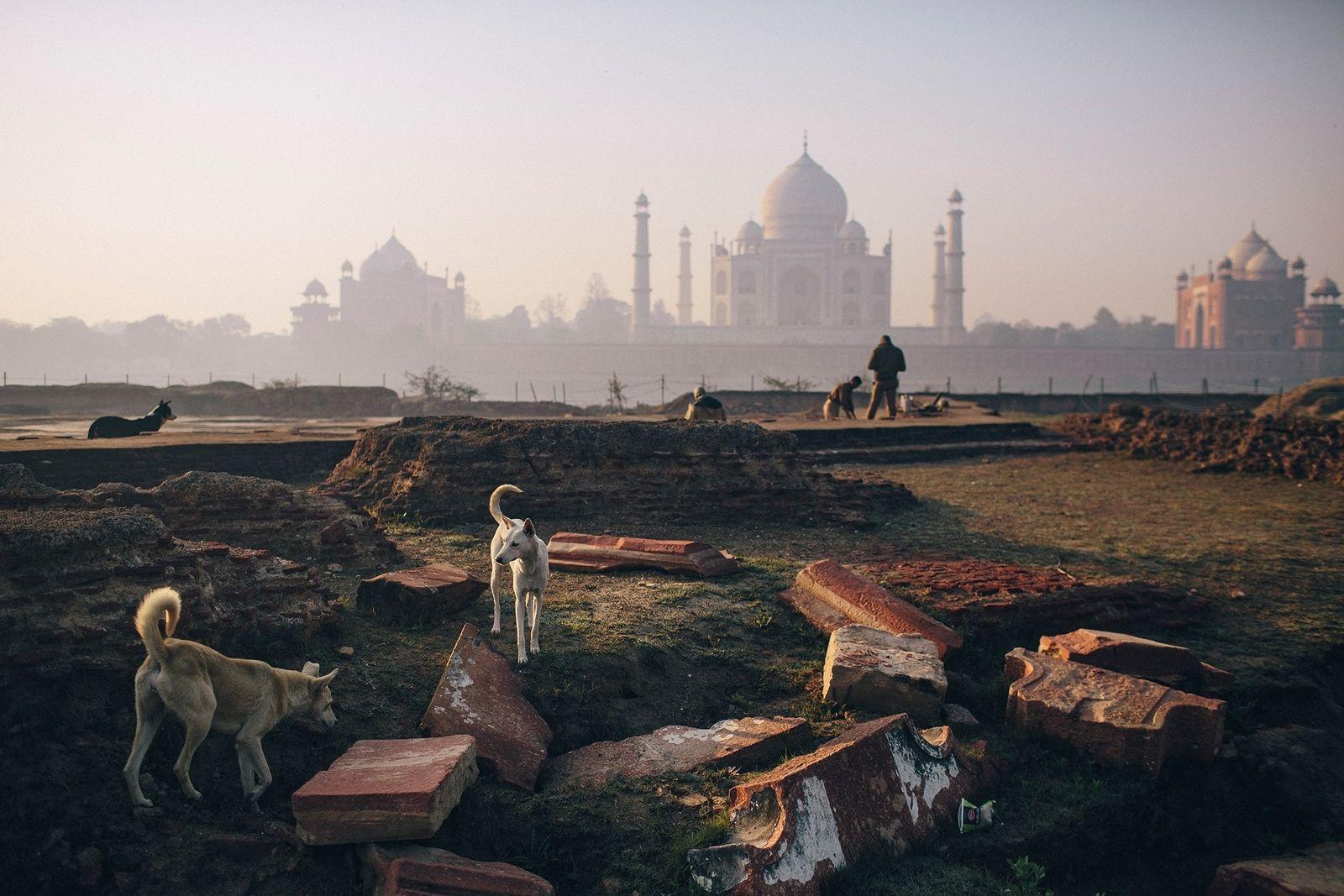 Adotar cães de rua está em alta na Índia