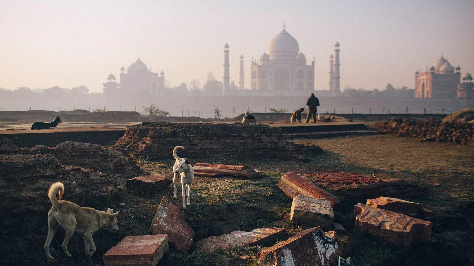 A Índia possui mais de 35 milhões de cães de rua, como esses perto do Taj ...