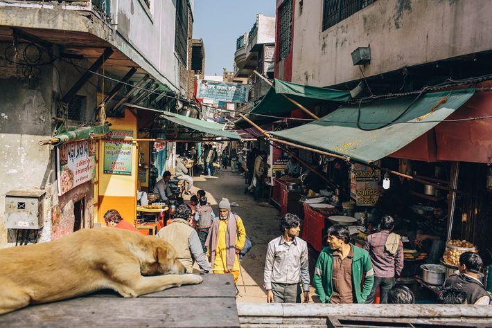 Um cão observa a vida passar perto de um templo em Uttar Pradesh, o estado mais ...
