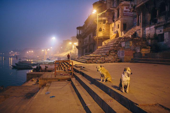 Dois cães de rua com cicatrizes olham desconfiados para a câmera. A vida de cães de ...