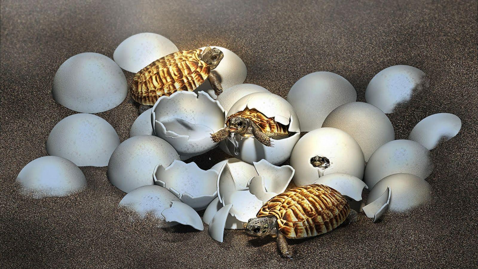 Ovo fossilizado encontrado na China revela surpresa em seu interior: o bebê de uma tartaruga gigante ...