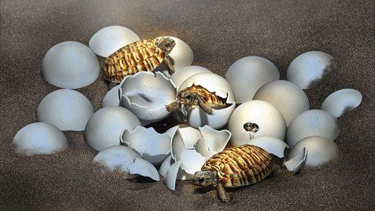Ovo fossilizado de tartaruga gigante pré-histórica revela filhote em seu interior