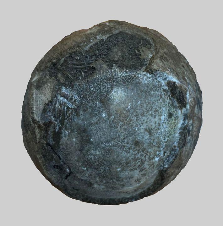 Ovo fossilizado do período Cretáceo, contendo um raro embrião de tartaruga em seu interior.