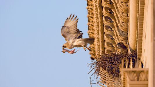 Número de aves nas cidades aumentou após 'lockdowns' do início da pandemia