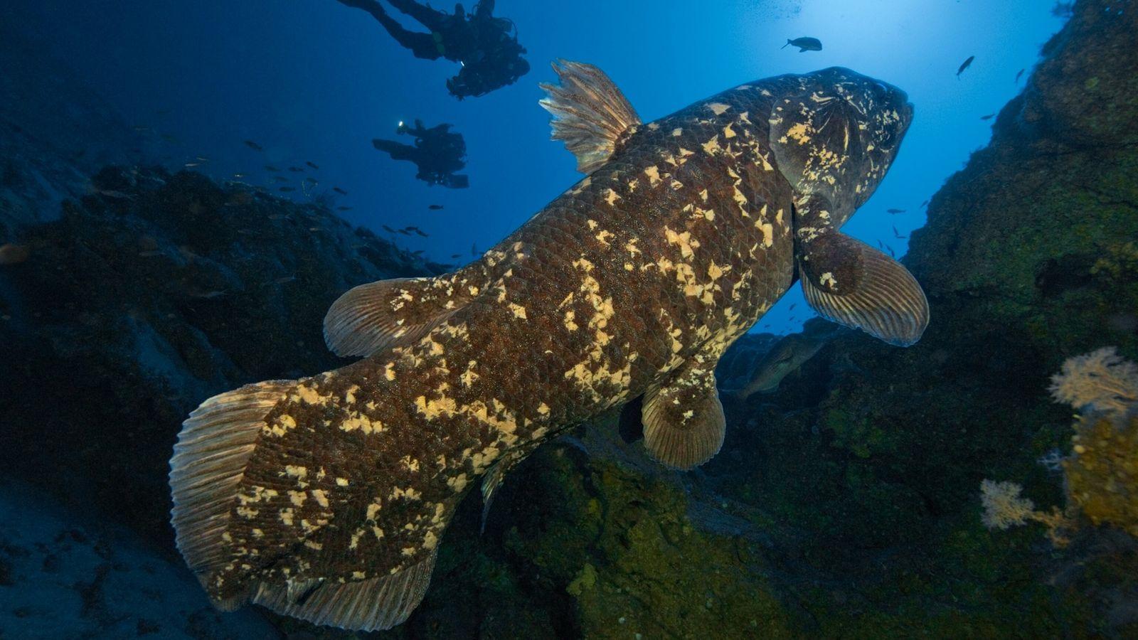 01-coelacanth-fish