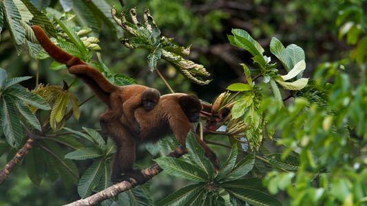 Restaurar paisagem em áreas prioritárias pode evitar 71% das extinções e mitigar crise climática