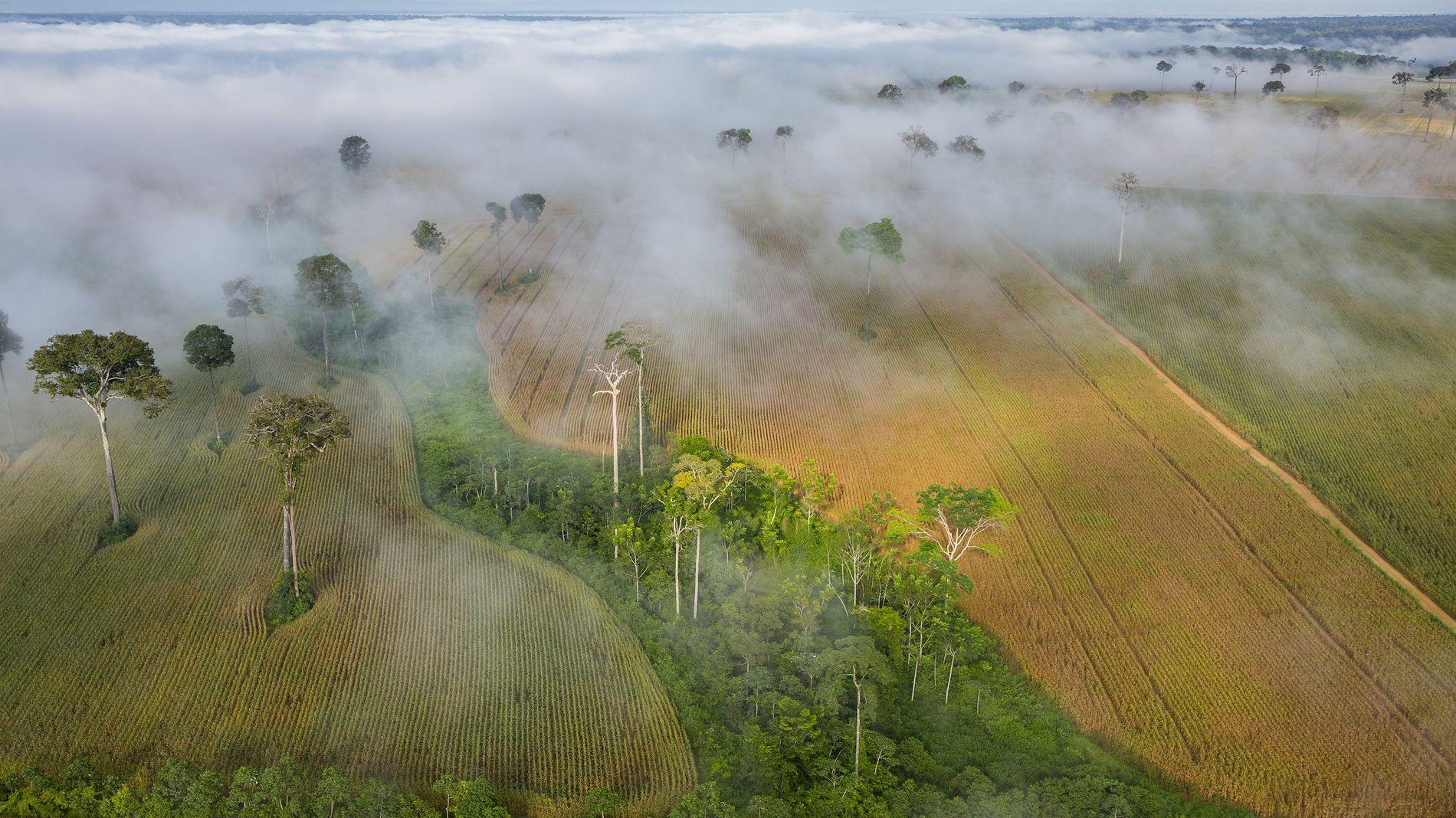 plantacoes mato grosso