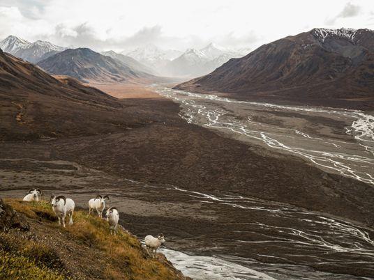 Degelo do permafrost leva Parque Nacional de Denali a reimaginar futuro