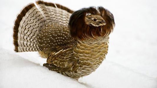 Vírus do Nilo Ocidental ainda existe e matou milhões de aves nos EUA