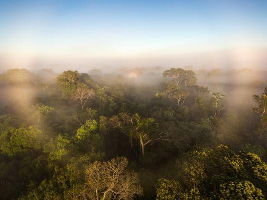 Amazônia pode estar agravando mudanças climáticas, indica estudo inédito